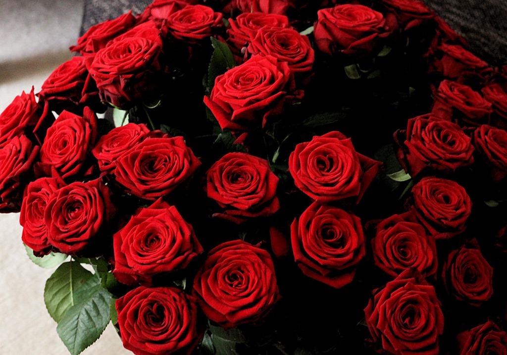 rote rosen wer war so wundervoll romantisch innenaussen. Black Bedroom Furniture Sets. Home Design Ideas