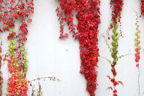 Herbst-Innen-Aussen-11