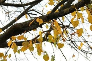 Herbst-Innen-Aussen-12