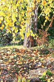 Herbst-Innen-Aussen-14