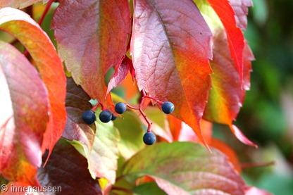 Herbst-Innen-Aussen-15