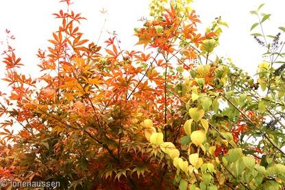 Herbst-Innen-Aussen-7