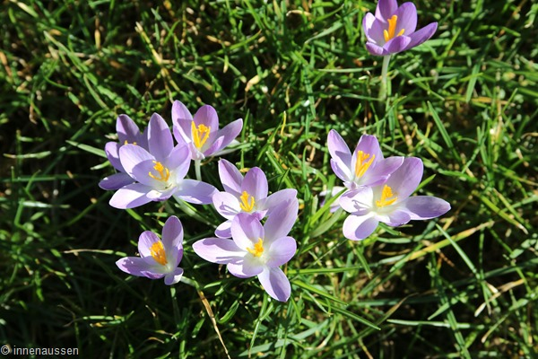 Blumen Februar