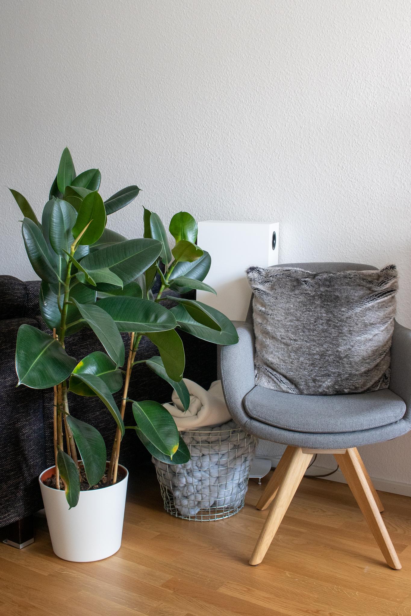 Pflanzen für Anfänger Pflegeleichte Grünpflanzen für euer Zuhause InnenAussen