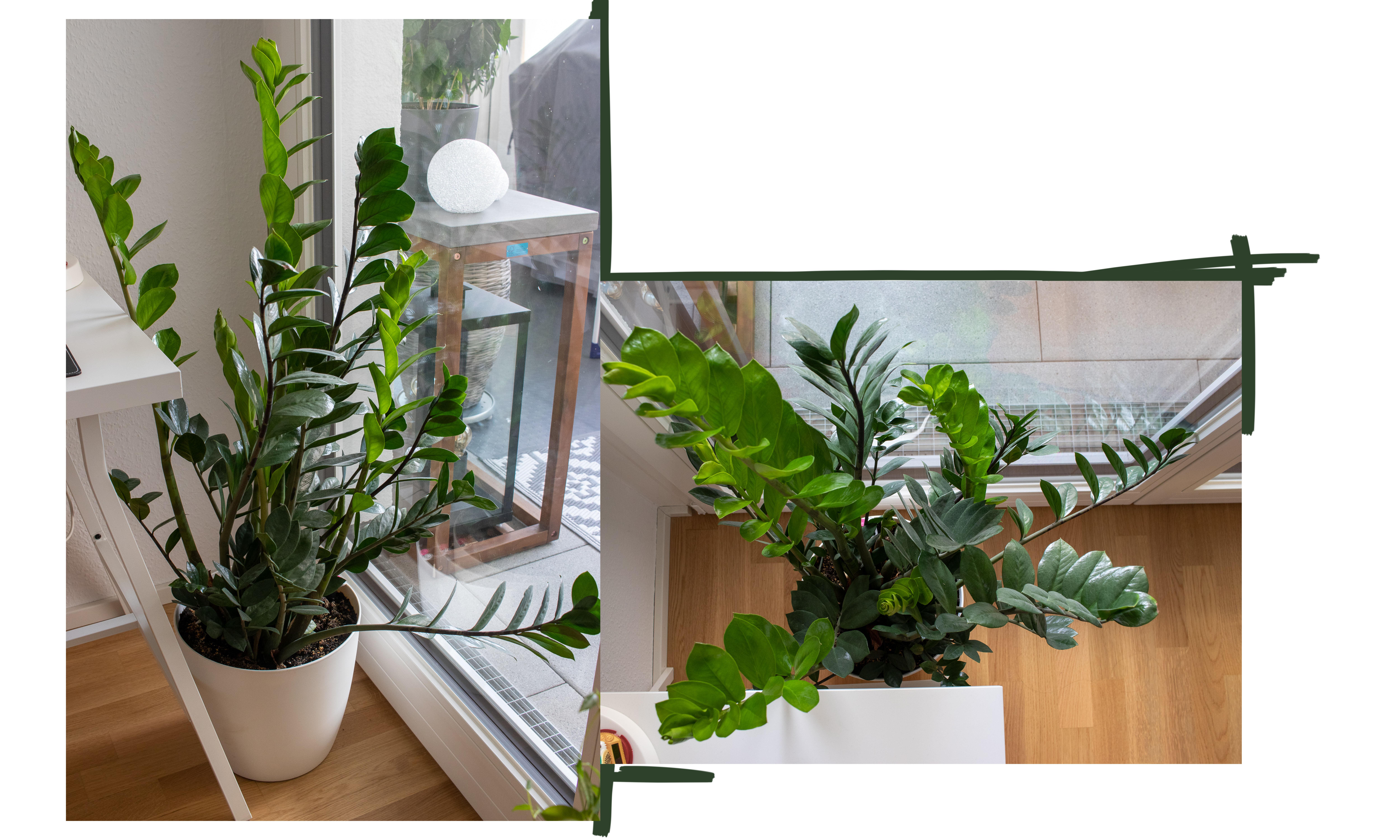 Pflanzen für Anfänger - Pflegeleichte Grünpflanzen für euer Zuhause ...