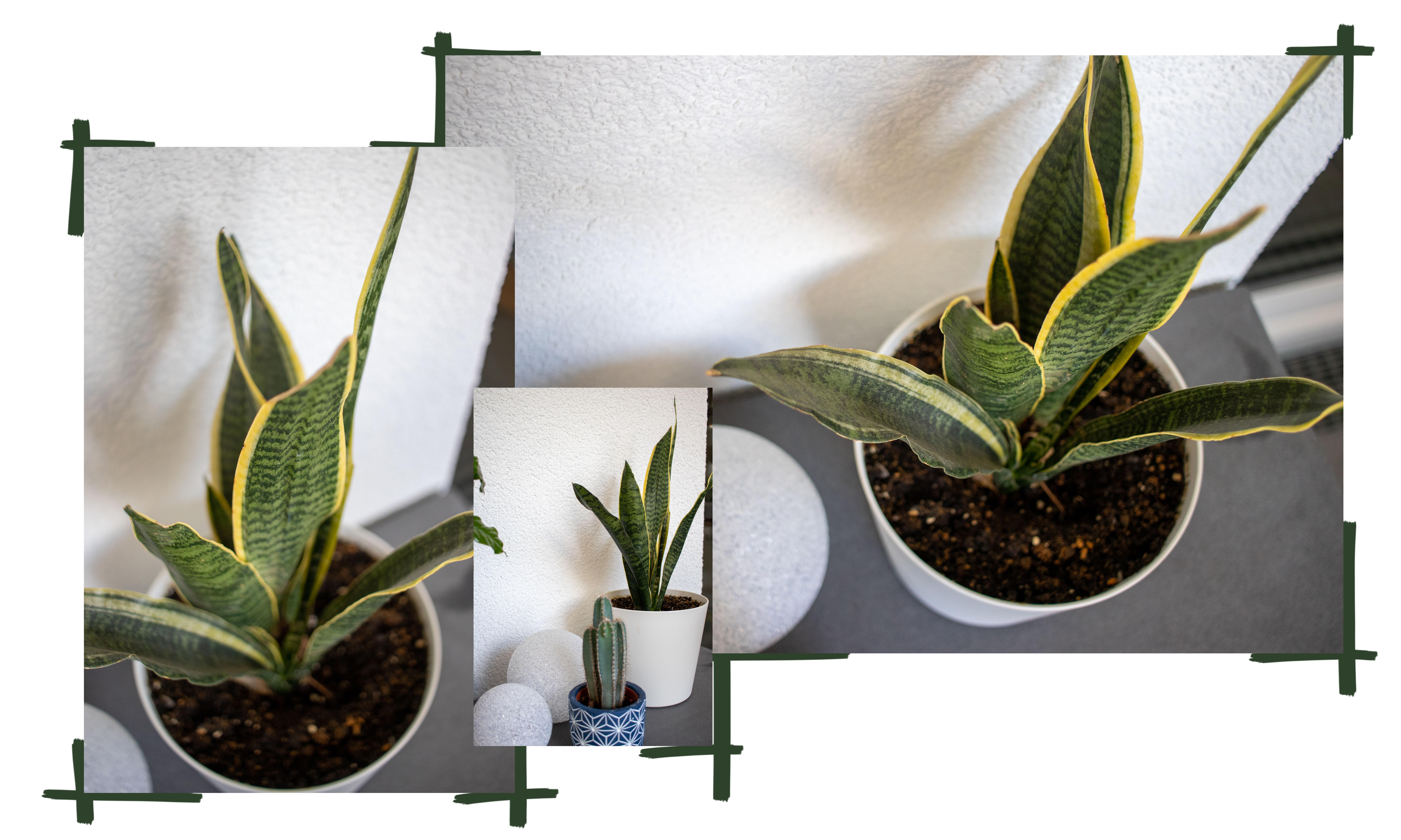 Pflanzen für Anfänger - Pflegeleichte Grünpflanzen für euer